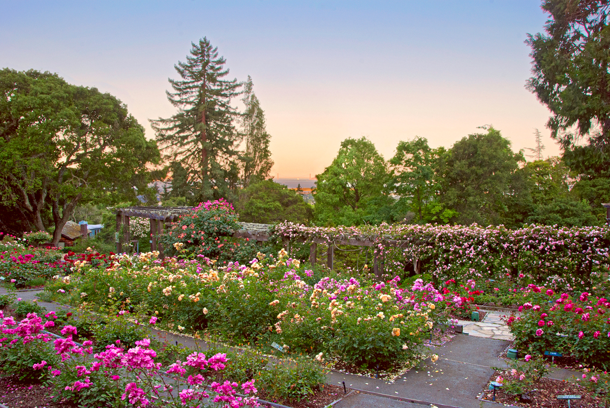 Cyril malin photography it 39 s all about enjoying life Berkeley rose garden